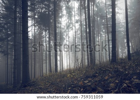 Forest trees in morning autumn season mist.