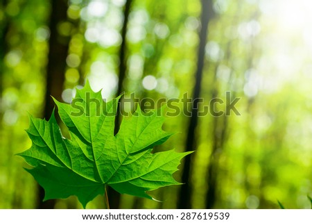 forest trees leaf. nature green wood sunlight backgrounds - stock photo
