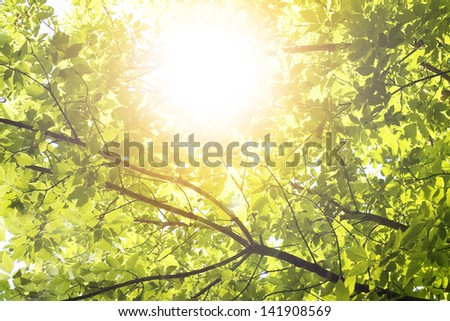 forest trees. nature green wood - stock photo