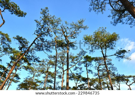 forest trees. nature green wood backgrounds - stock photo