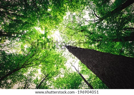 forest trees nature green wood sunlight backgrounds - stock photo