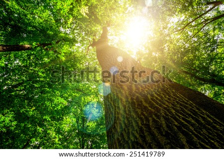 forest trees. nature green wood, sunlight backgrounds. - stock photo