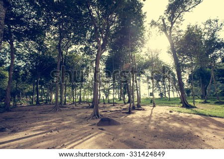 forest trees. nature green wood sunlight backgrounds. - stock photo
