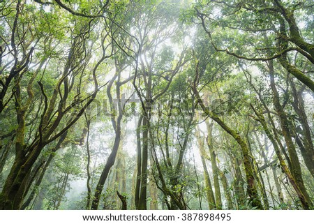 forest trees, nature green wood sunlight backgrounds, doi inthanon national park in chaing mai, thailand - stock photo