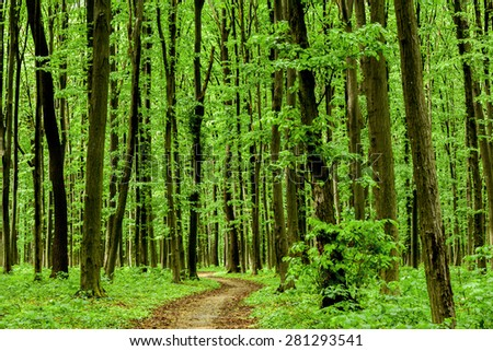 forest trees. nature green wood sunlight backgrounds. sky  - stock photo