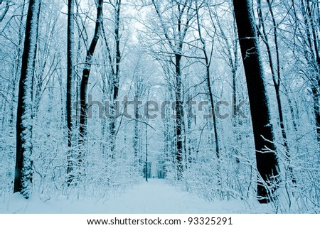 forest trees. nature snow wood  backgrounds. - stock photo