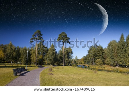 forest under a starry sky radiance.Elements of this image furnished by NASA - stock photo