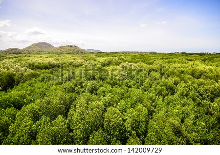 forest under blue sky with white clouds