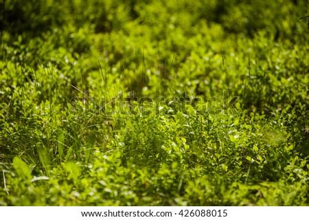 forest vegetation - stock photo