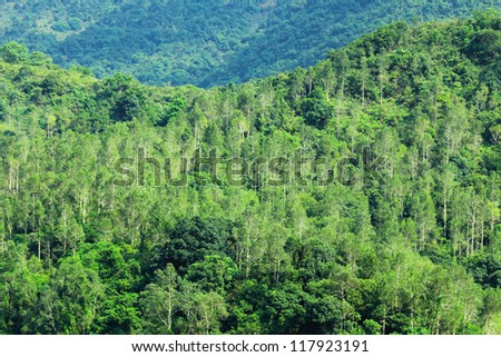 forest view - stock photo