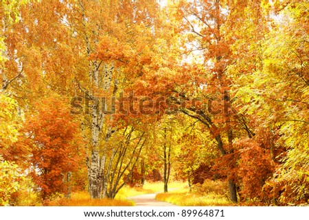 Forest View Sunlit Foliage