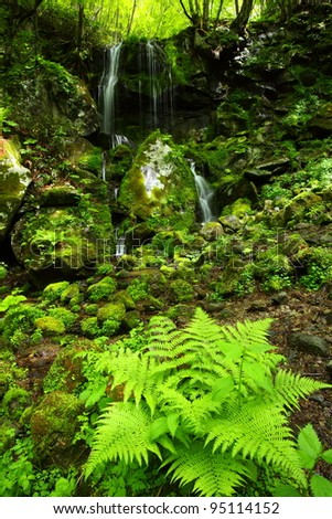 Forest waterfall and stones overgrown with moss