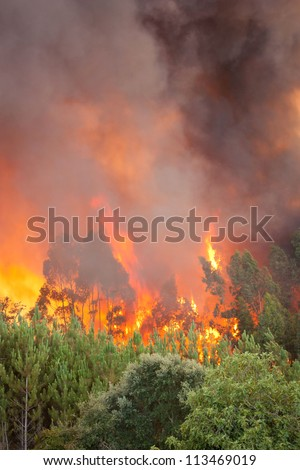 Forest Wild fire detail on Portugal Summer - stock photo
