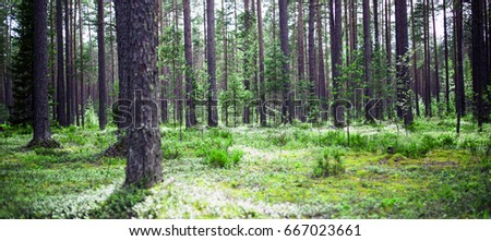 Forest. Wild plants and trees. Ecology panorama