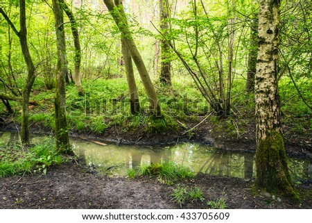 Forest with a stream in summer on overcast day