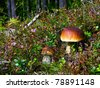 Forest with  big edible mushroom - cep - stock photo