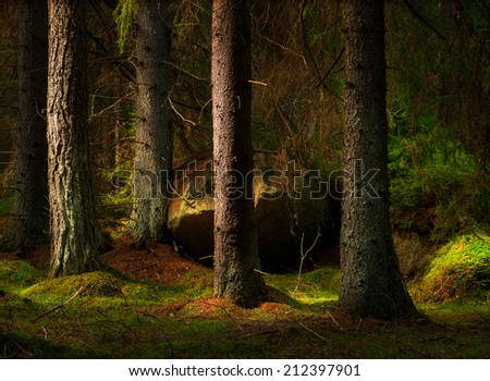 Forest with conifers and big boulder in magic evening light - stock photo