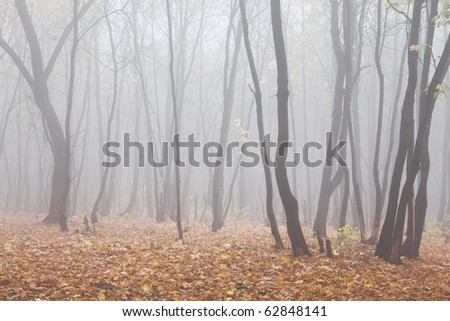 forest with fog - stock photo