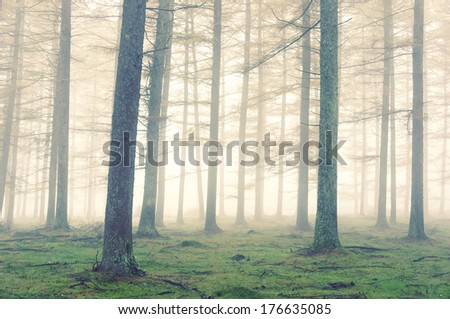 forest with fog and a vintage effect - stock photo