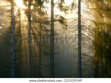 Forest with fog and sunlight - stock photo