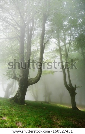 forest with fog in spring - stock photo
