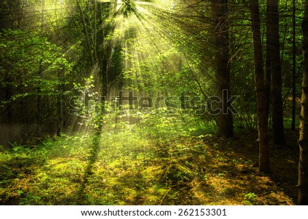 Forest with light - stock photo
