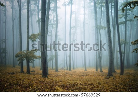 forest with orange leafs and grass and elegant trees - stock photo