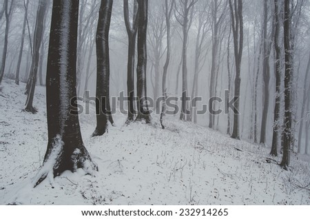 forest with snow covered ground in winter - stock photo