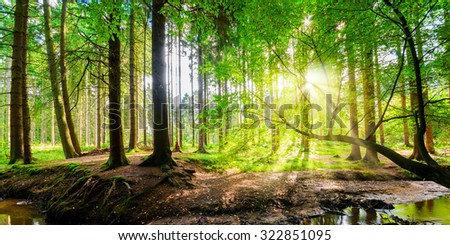 Forest with Sun
