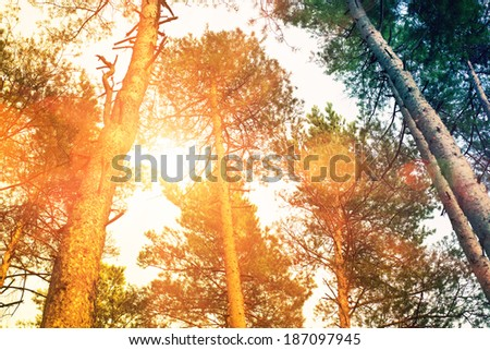 forest with sun in trees - stock photo