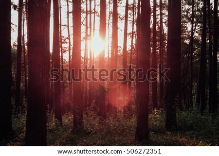 forest with sunlight and shadows at sunset