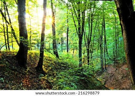 Forest with sunrays in the morning