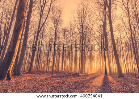Forest with tall trees at sunrise in the morning