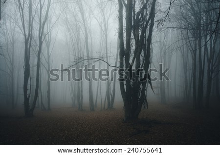 forest with tree in mist - stock photo