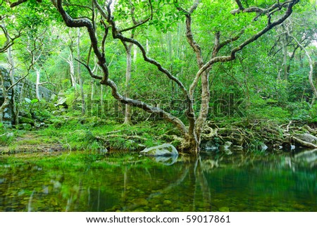 forest with water and tree - stock photo