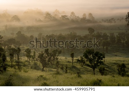 Forested in low lying cloud in the morning with Many of the trees in mist in a scenic landscape view