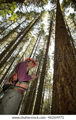 Forester using an auger to tell the age of a Douglas fir
