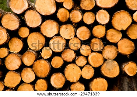 forestry industry tree felling and timber logging - stock photo