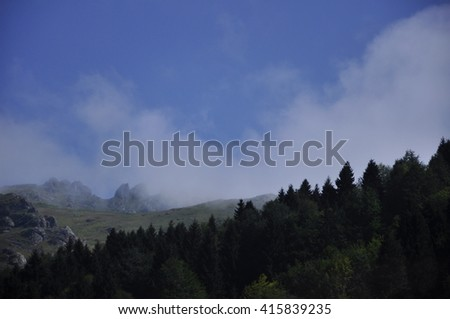 forests and misty hills