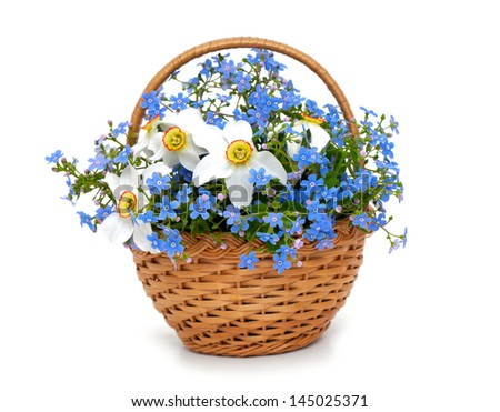 forget-me-not and narcissus flowers in a basket over white - stock photo