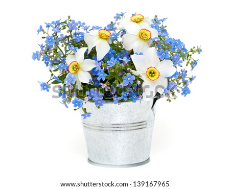 forget-me-not and narcissus flowers over white - stock photo