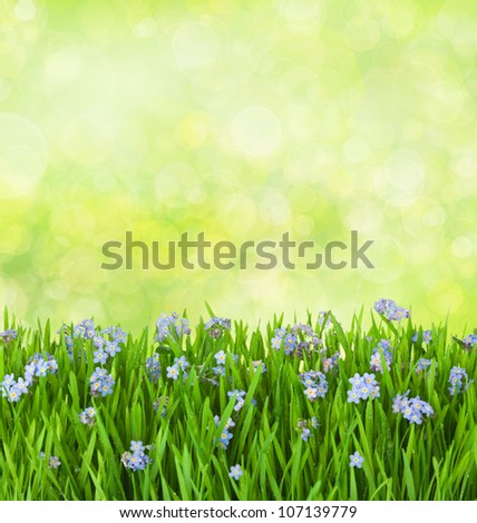 forget-me-not blue flowers into green grass with water drops on defocused background - stock photo