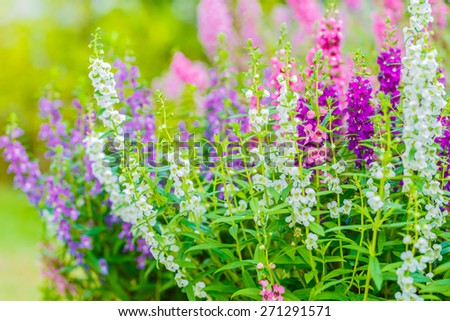 Forget me not field background - stock photo