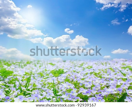 Forget me not field on sunny beautiful day - stock photo
