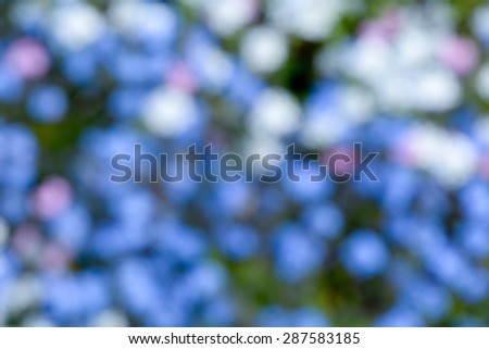 Forget-me-not flowers abstract background