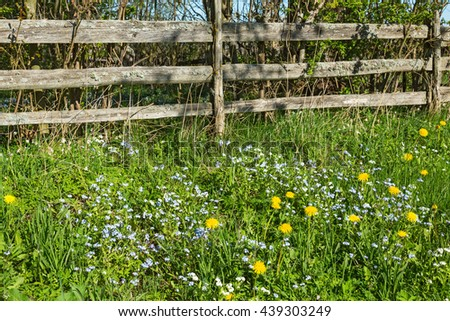 Forget me not flowers at a wooden fence in spring - stock photo