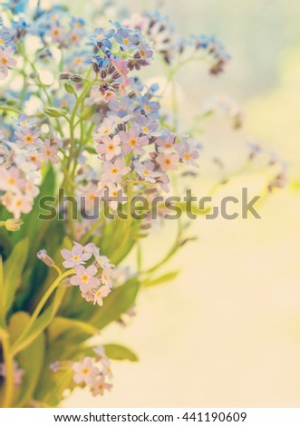 Forget-me-not flowers in  soft focus, floral background. Little meadow flowers at blurred background - blue forget-me-not in vintage style, hipster colors. - stock photo