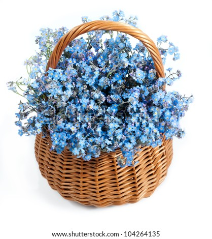 Forget-me-not flowers in the basket - stock photo