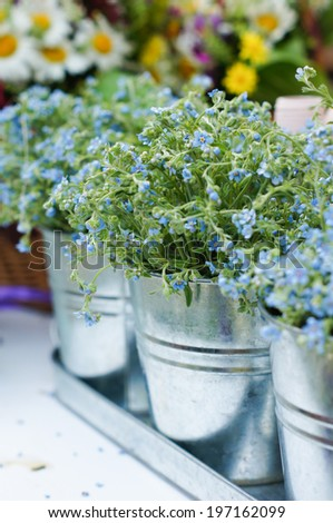 Forget me not flowers in the metal basket on the table