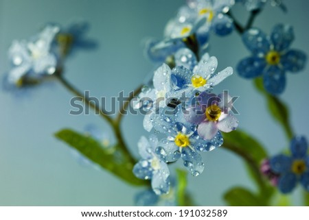 Forget-me-not flowers in water drops, beautiful floral background - stock photo